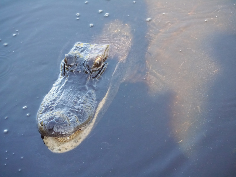 Air-boat tour of the Everglades, Florida