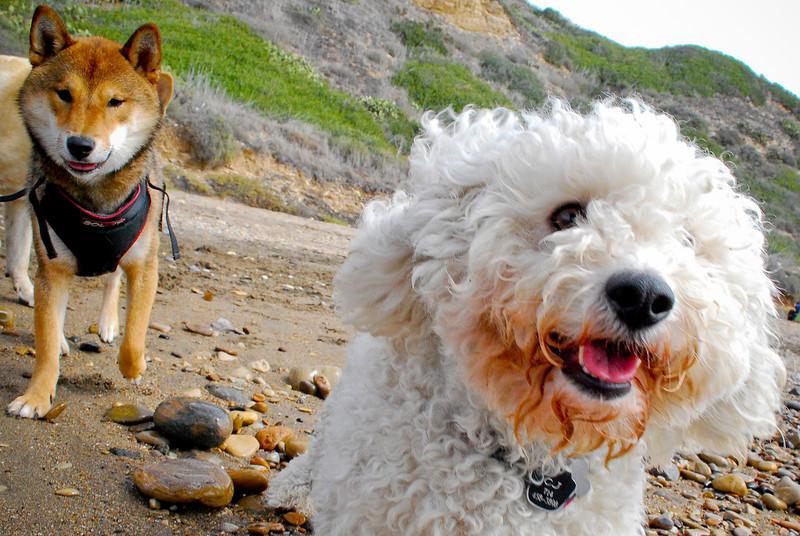 dogs_beach-056.jpg