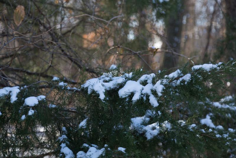 2013_12_25 Snowy Branch 001.jpg