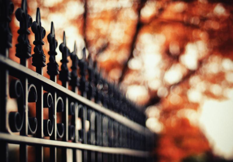 iron fence autumn tree bokeh red fall LRG.jpg