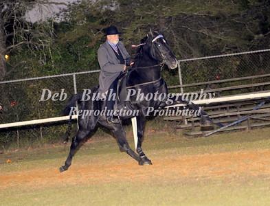 CLASS 41  WALKING HORSE CHAMPIONSHIP