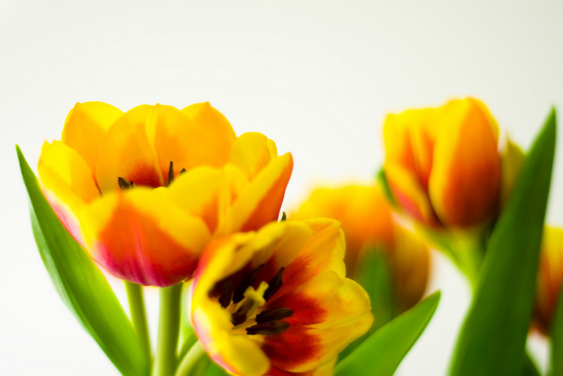 Tulip Light Box_14.jpg