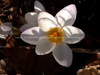 016-flower-nlg-27mar05-7525