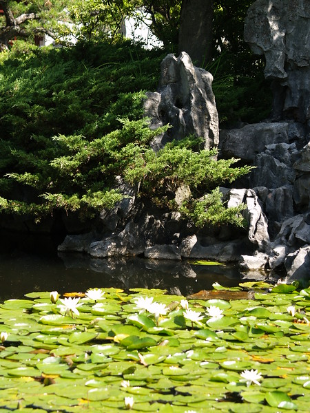 Water lillies and rock formations (2009).