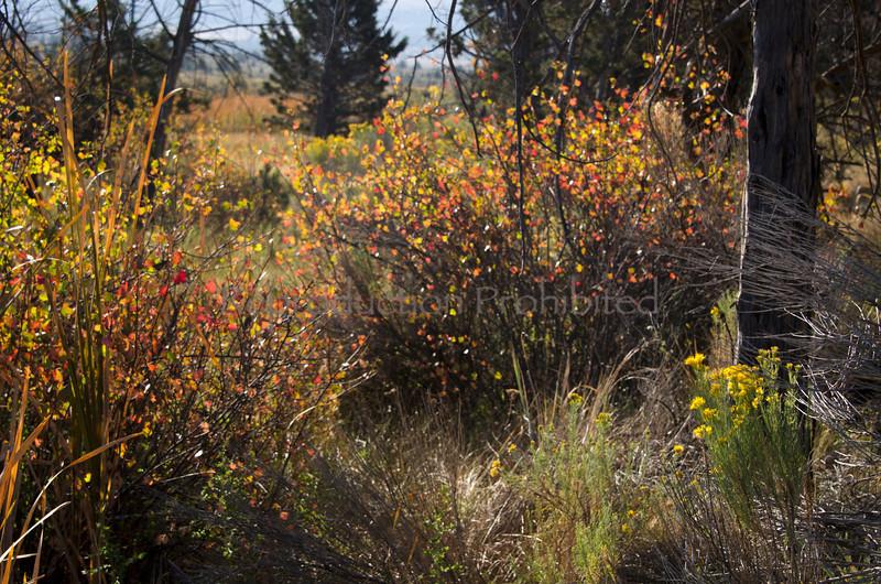 Restoration Crooked River National Grassland, OR. September 2012