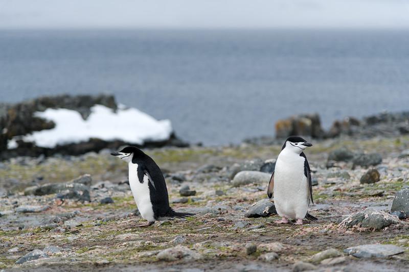 Antarctica-1391.jpg