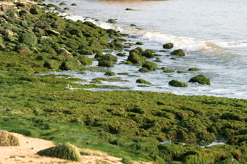 Rocky Beach Beach