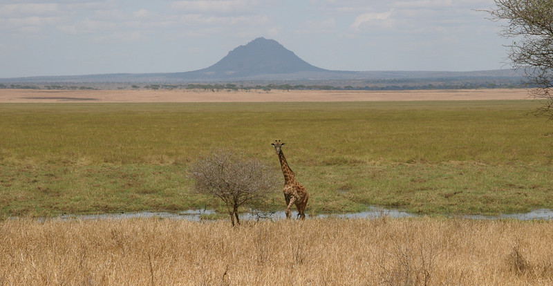 We begin our safari in the beautiful Tarangire National Park. This park abounds with elephants, giraffes, zebras, impala, gazelle, lions, and many more beautiful and exciting creatures!