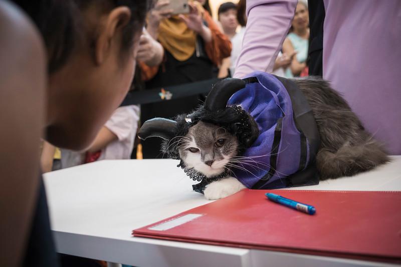 VividSnaps-The-Seletar-Mall-CAT-Dress-Up-Contest-245.jpg
