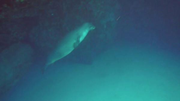 MONK SEAL ENCOUNTER IN MAUI 5-14