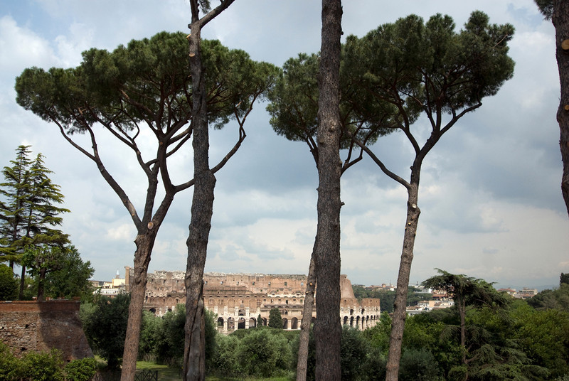 Trees with a view of the Colosseum in Rome, Italy