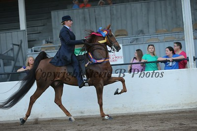 43. Five Gaited Jackpot