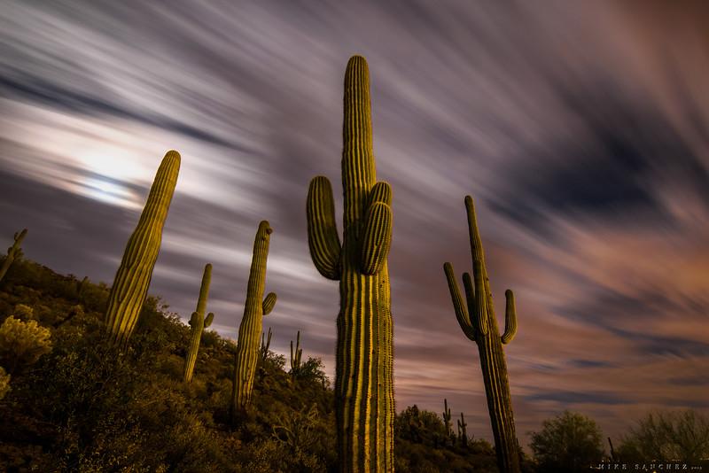dreamy saguaro stand.JPG