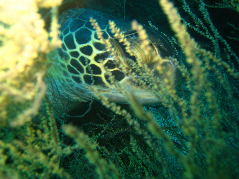 Diving in the Galapagos (15 of 392)