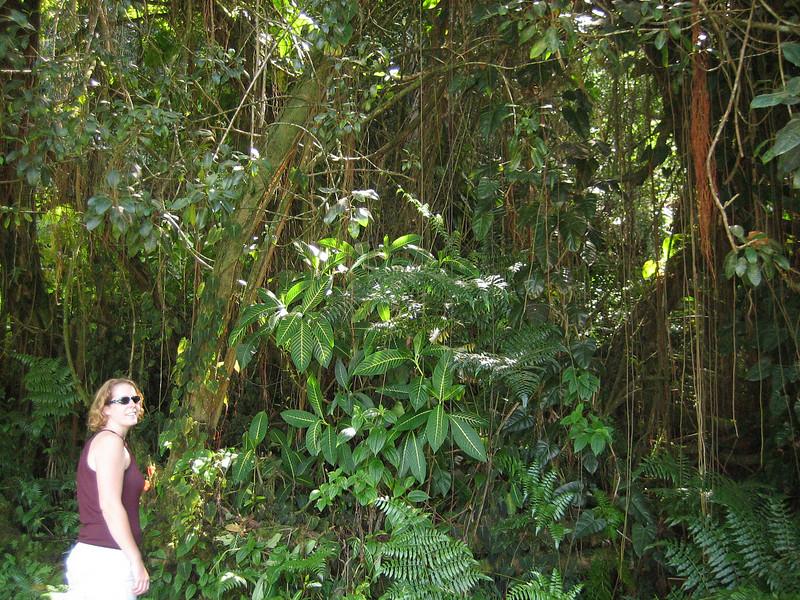 Hiking at Akaka Falls