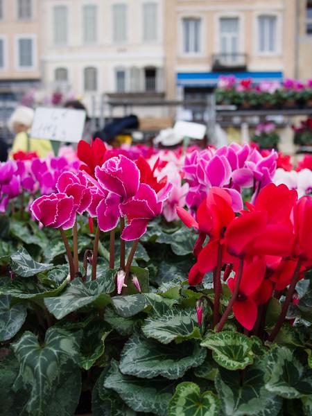 marseille flower market.jpg