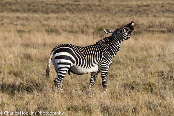 Mountain Zebra National Park May 2014
