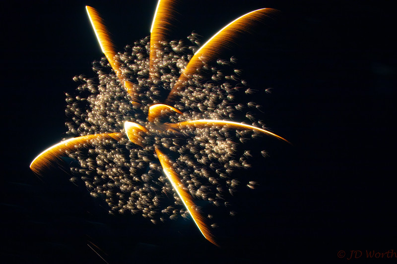0705-0719 LOW Fireworks -Golden Spider with Minis-5384.jpg