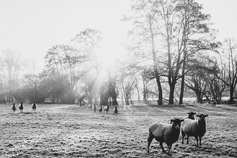 A frosty start (14 of 20).jpg