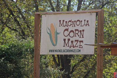 Corn Maize Magnolia Springs