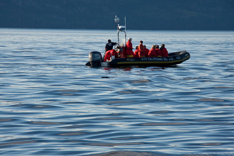 2011 quebec whale watching (57 of 80).jpg