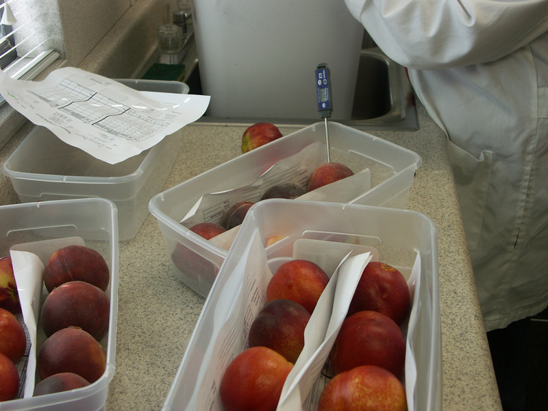 Testing in Summeripe Lab.
