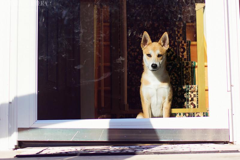 Watchdog-3.jpg