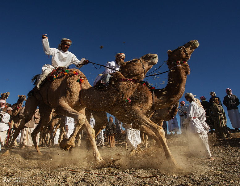 camels (45) copy- Camel Race.jpg