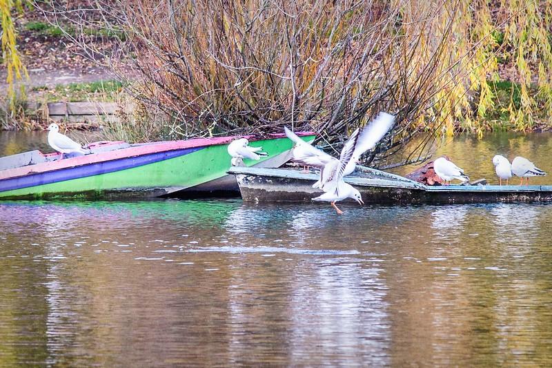 Lliswerry Pond & Park -12.jpg