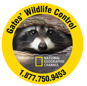 AAA Gates Wildlife control.png