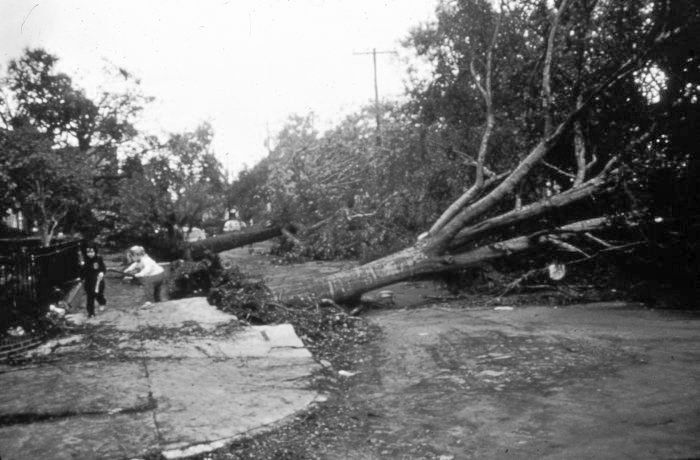 . Large oak trees over 100 years old came down all over Charleston After passage of Hurricane Hugo in September, 1989. National Hurricane Center. NOAA\'s National Weather Service (NWS) Collection