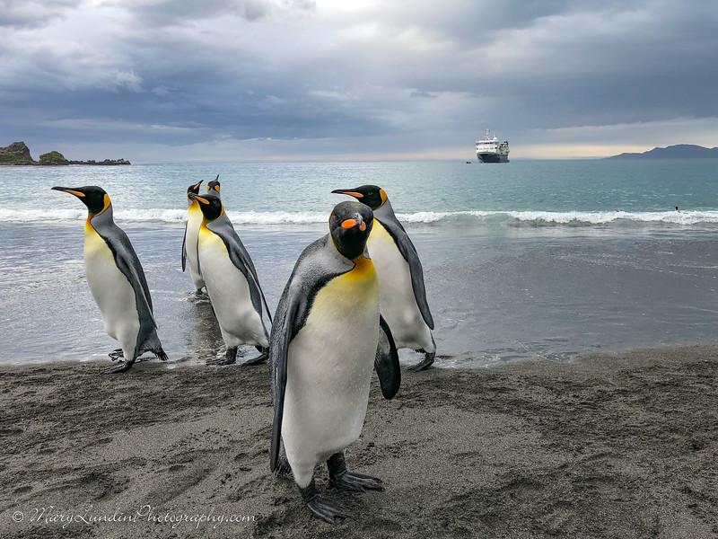 Antarctic-158