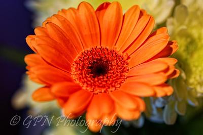 Indoor Flowers 2016