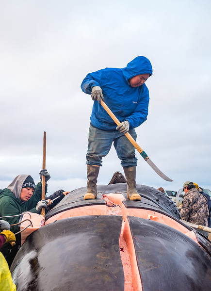 Utqiagvik Whaling-6104746-Juno Kim-nw.jpg