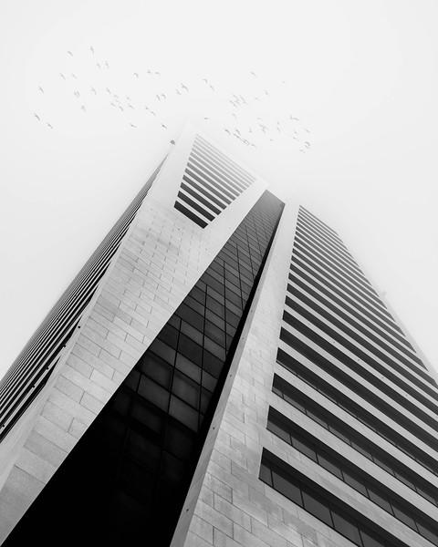 _DSC9729-bewerkt-seagulls.jpg