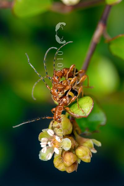 New Zealand Invertebrates