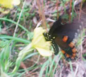 2010 August 3 Butterflies
