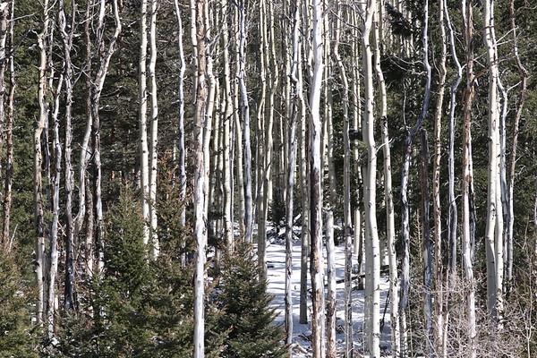 11/15/18 Randall Davies/Santa Fe Ski Area