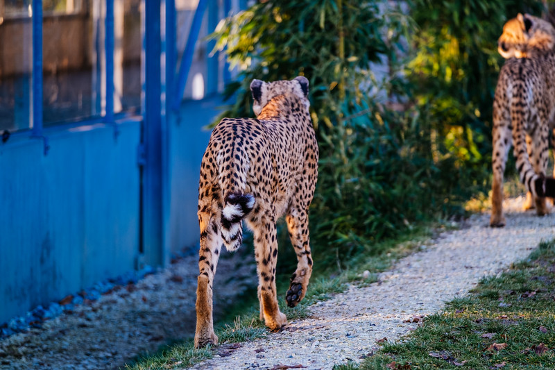 Tonis Zoo-0245.jpg