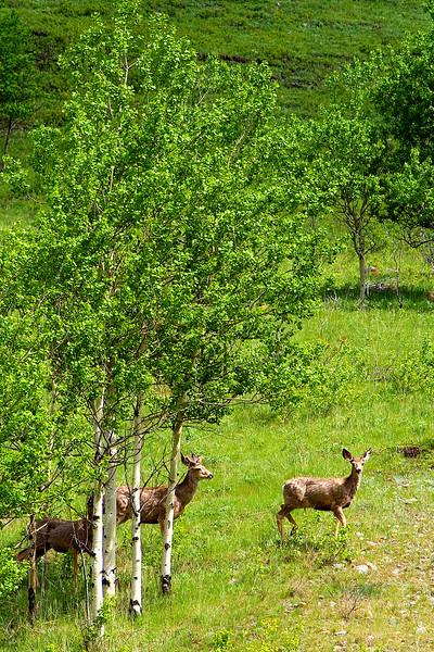 saw some dear deer