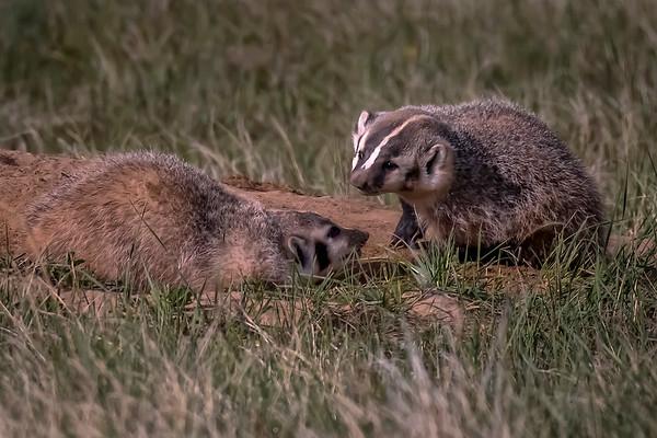 RockyMountain Arsenal Wildlife Refuge