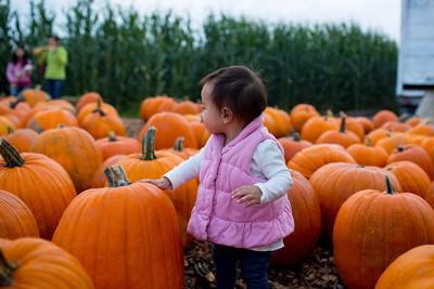 2013 - Pumpkin Patch