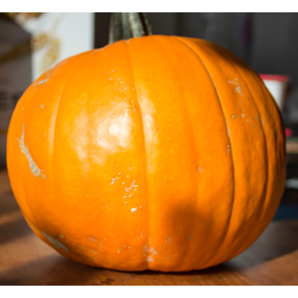 pumpkin bright.jpg