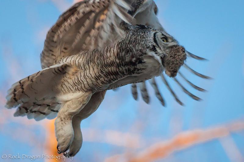 Owl-19.jpg
