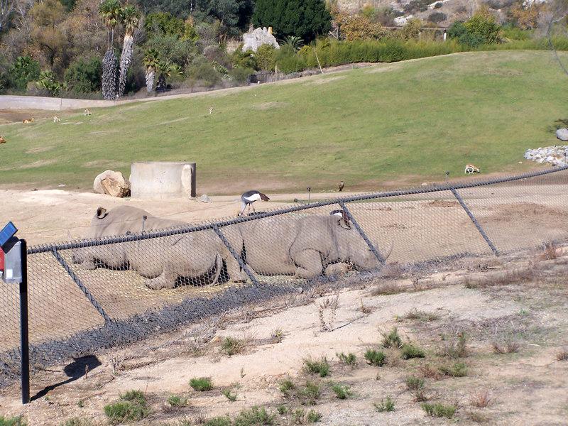 San Diego Wild Animal Park, Escondido, CA.