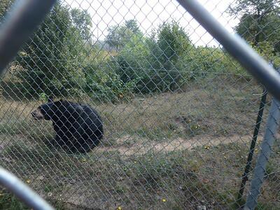 Oswald Bear Ranch