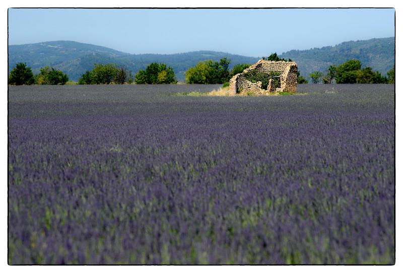 lavender ruins.jpg