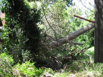 TreesOfSanLuis