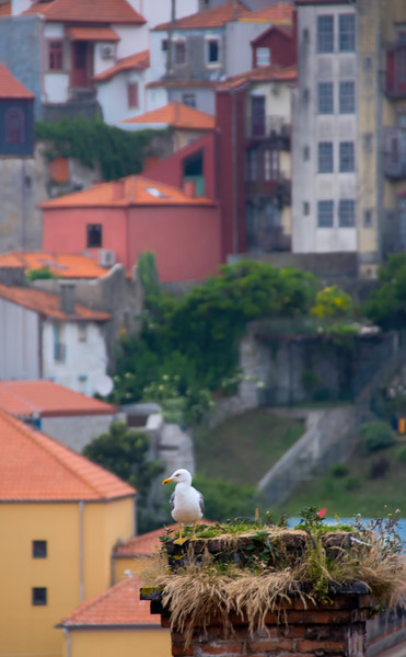 2016 Portugal Porto-1.jpg