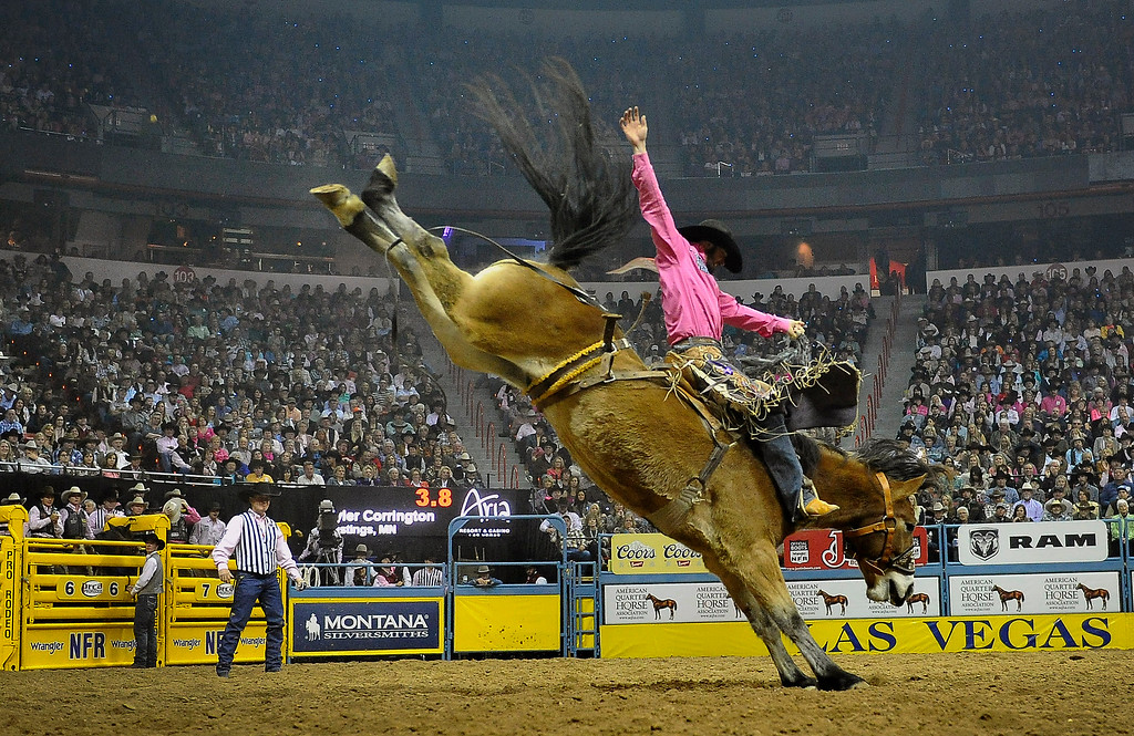 . Tyler Corrington of Hastings, Minn. competes in the saddle bronc riding during the fifth go-round of the National Finals Rodeo at the Thomas & Mack Center on Monday, Dec. 8, 2014, in Las Vegas. (AP Photo/Las Vegas Review Journal, David Becker)